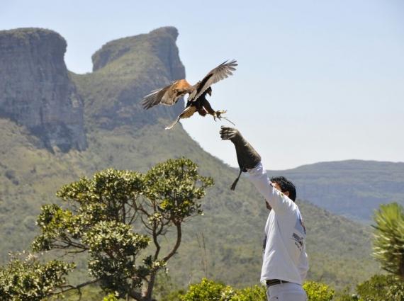 Resultado de imagem para Parque dos Falcões aracaju